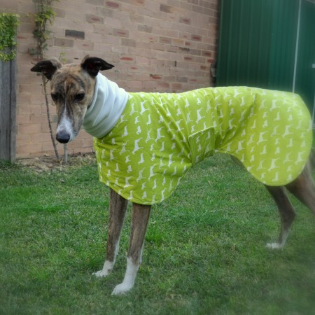 Greyhound Coat on Homemade, Healthy, Happy
