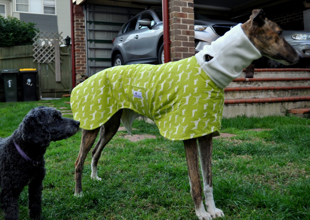 Greyhound Coat on Homemade, Healthy, Happy