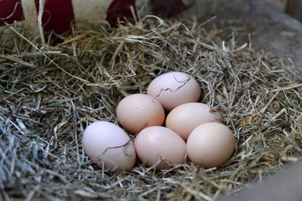 Pasture-Raised Eggs at Ginger & Brown Farmstead, on Homemade, Healthy, Happy