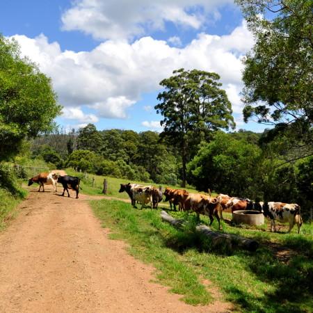 8 Big Lessons from a Biodynamic Dairy Farm